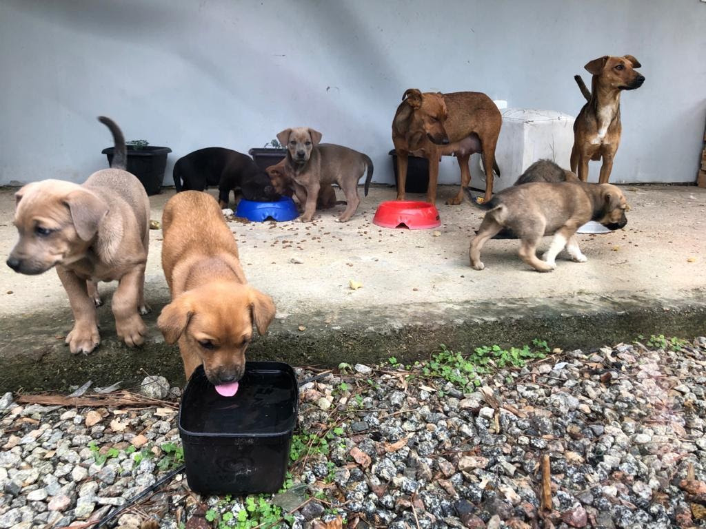 Moad Home apoia o resgate e a adoção de animais